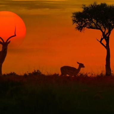 133608_African-safari-sunset-with-silhouette_GettyImages-532389864_credit-iStock_Getty-Images---Hero