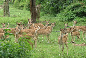 Summer Vacation in Bandipur Forest