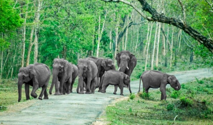 things-to-know-before-planning-your-trip-to-bandipur-wildplanet-resort-blog-750x443