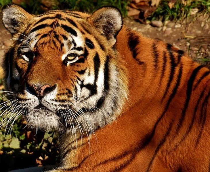 Best destination of jungle safari