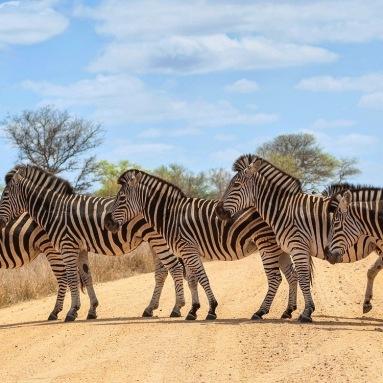 Kruger South Africa 2
