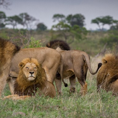 Kruger South Africa 3