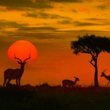 Kruger South Africa 4