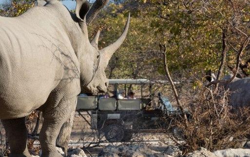 Ongava Park Namibia