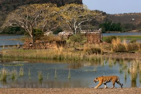 Ranthambore Park