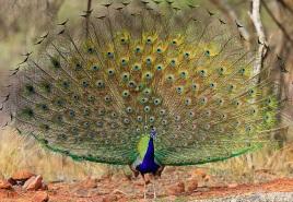 Ranthambore Park Safari 1