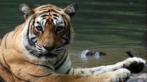 Ranthambore Tiger Park