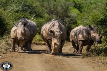 Rwanda Safari