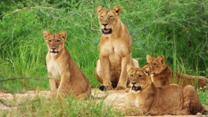 Rwanda Wild life 2