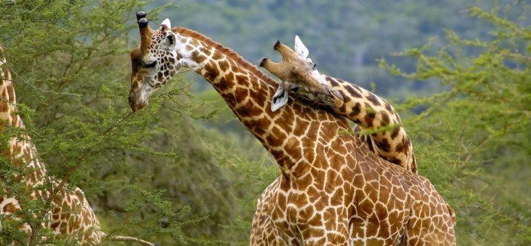 Rwanda Wild Life