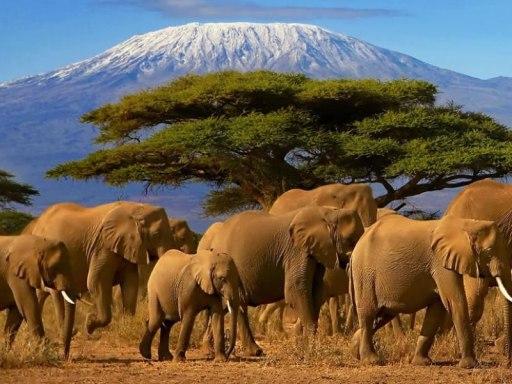 Serengeti Tanzania elephant