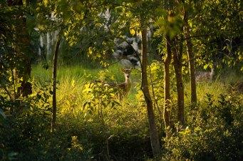 Sunderban West Bengal 4