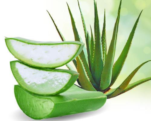 Best uses of aloe vera
