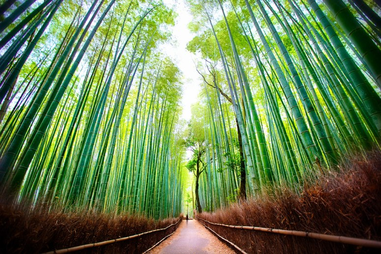 Most Heavenly place Bamboo Forest Japan