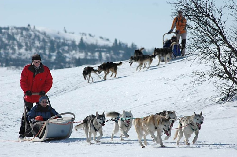 Northern Norway husky dogs ski